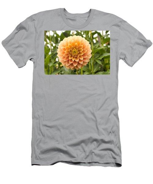Sunny Dahlia Men's T-Shirt (Athletic Fit)
