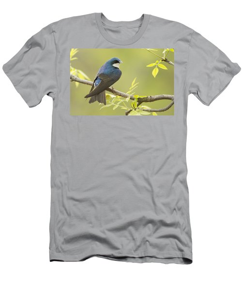 Swallow Men's T-Shirt (Slim Fit) by Mircea Costina Photography