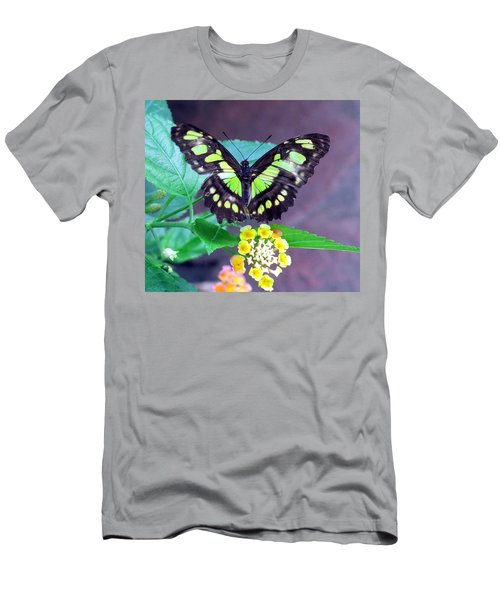 Tailed Jay Visits Lantana Men's T-Shirt (Athletic Fit)