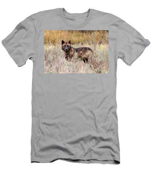 Teton Wolf Men's T-Shirt (Athletic Fit)