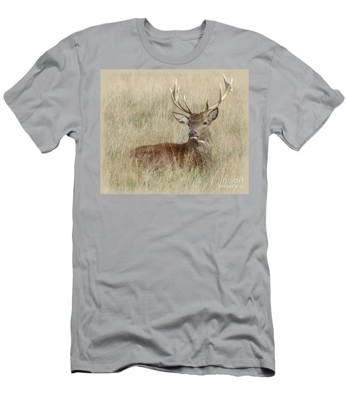 The Gentle Stag Men's T-Shirt (Athletic Fit)
