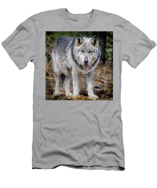Men's T-Shirt (Slim Fit) featuring the photograph The Great Gray Wolf by Teri Virbickis
