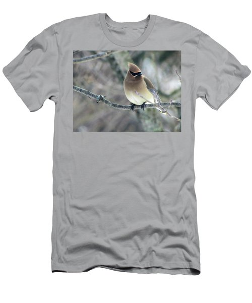 The Masked Cedar Waxwing Men's T-Shirt (Athletic Fit)