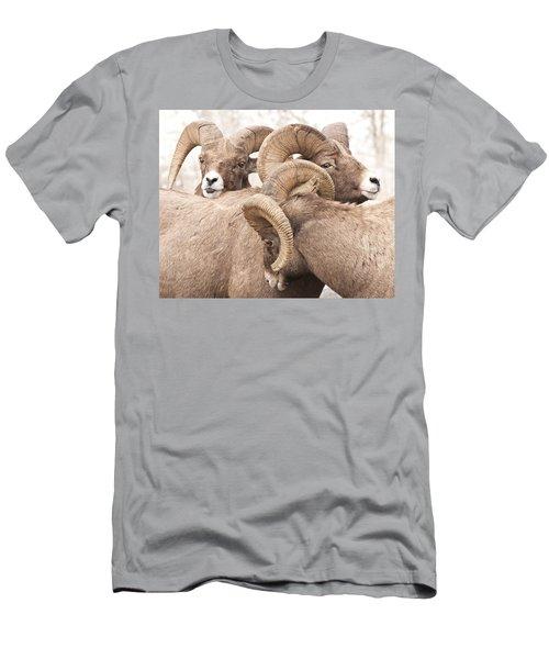 Three Bighorn Rams Men's T-Shirt (Athletic Fit)