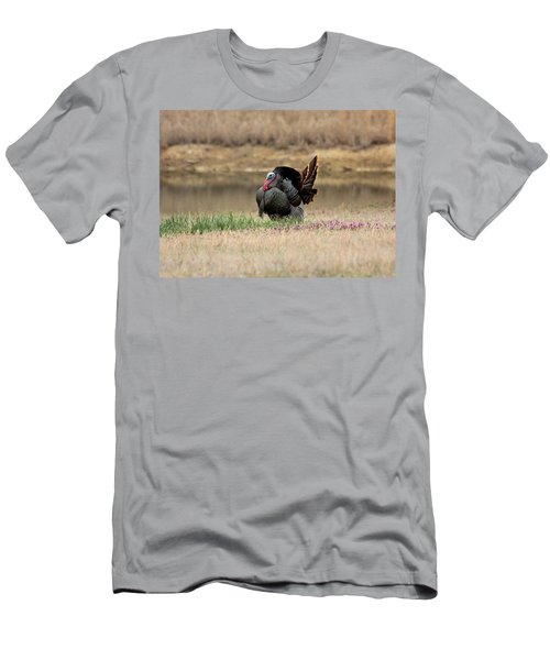 Tom Turkey At Pond Men's T-Shirt (Slim Fit) by Sheila Brown