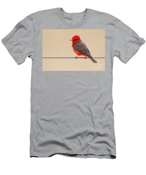 Vermilion Flycatcher Men's T-Shirt (Athletic Fit)