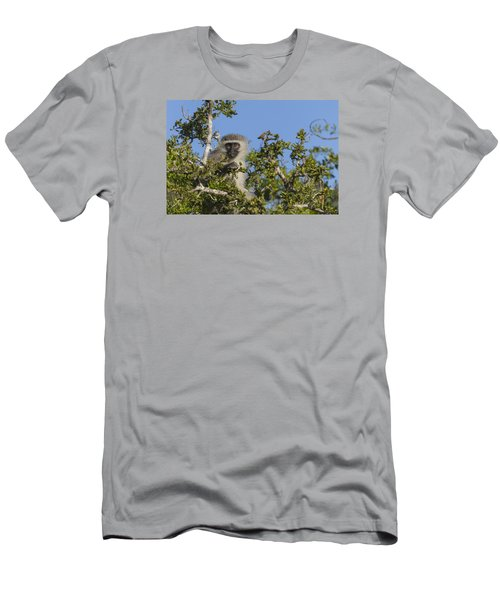 Vervet Monkey Perched In A Treetop Men's T-Shirt (Athletic Fit)
