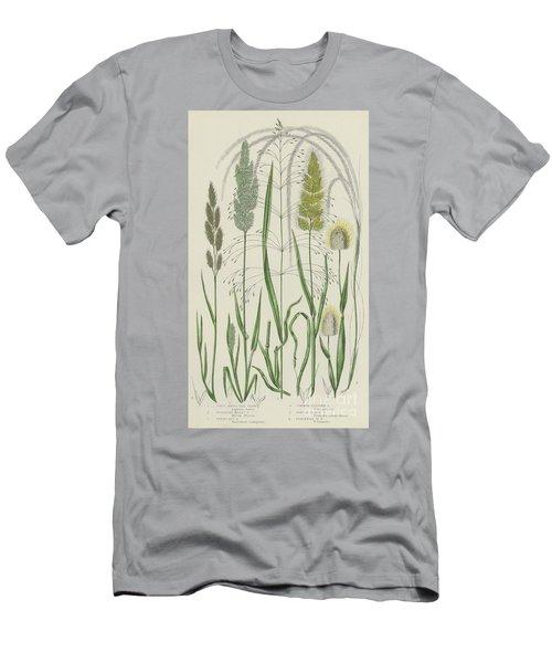 Vintage Botanical Print Of Grass Varieties Men's T-Shirt (Athletic Fit)