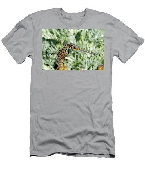 Warming-up - Darner Dragonfly Men's T-Shirt (Athletic Fit)