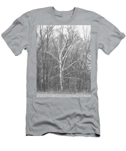 White Birch In Bw Men's T-Shirt (Slim Fit) by Erick Schmidt