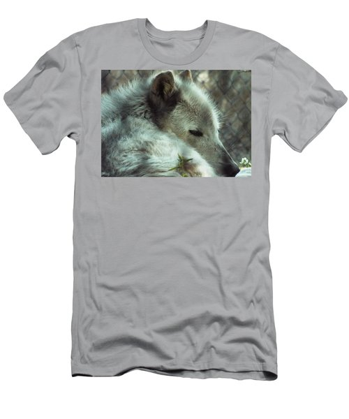 Wolf At Rest Men's T-Shirt (Athletic Fit)