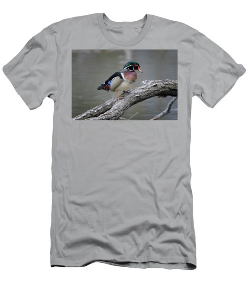 Wood Duck Drake Men's T-Shirt (Athletic Fit)