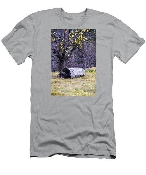 Yellow Apples Men's T-Shirt (Slim Fit) by Tom Singleton