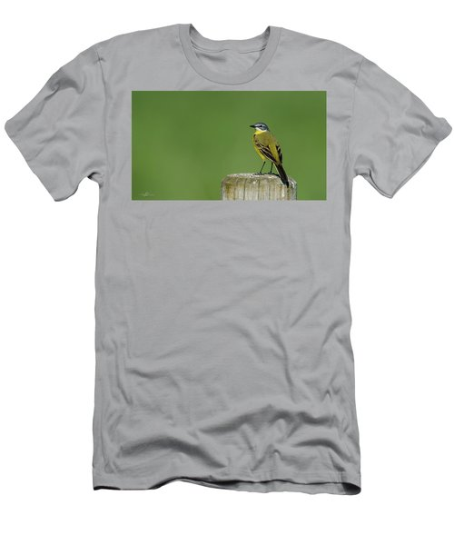 Yellow Wagtail Perching On The Roundpole Men's T-Shirt (Athletic Fit)