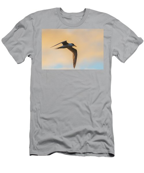 Crested Tern In The Early Morning Light Men's T-Shirt (Athletic Fit)