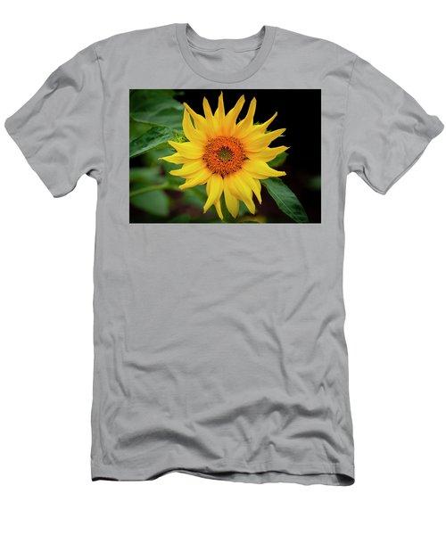 Sunflowers  Helianthus 015 Men's T-Shirt (Athletic Fit)