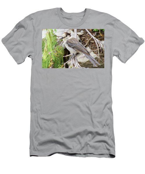 Camprobber - The Gray Jay Men's T-Shirt (Athletic Fit)