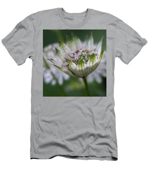 Astrantia Men's T-Shirt (Athletic Fit)