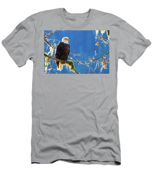 Backlit Bald Eagle In Squamish Men's T-Shirt (Athletic Fit)