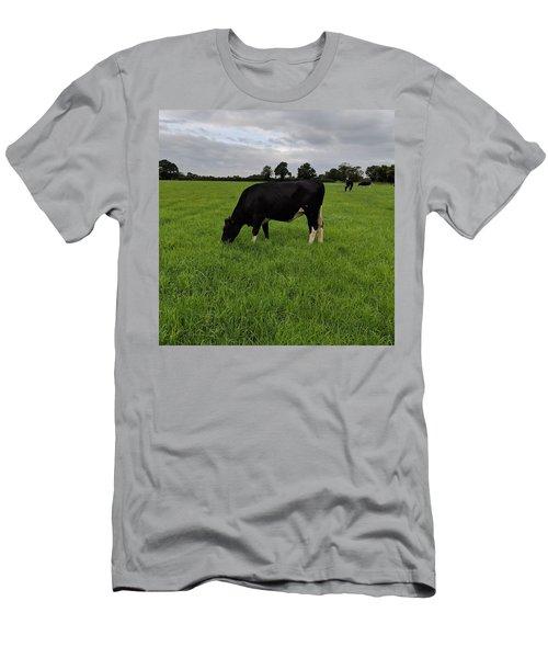 Beautiful Dairy Heifer Men's T-Shirt (Athletic Fit)