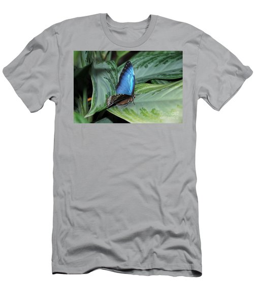 Blue Morpho Butterfly On A Green Plant Men's T-Shirt (Athletic Fit)
