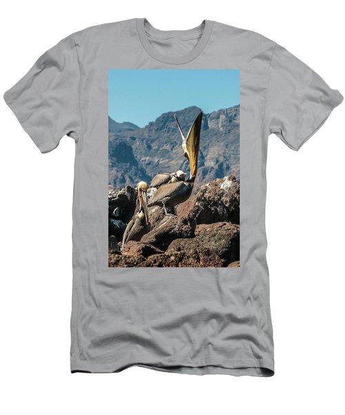 California Brown Pelicans In Ilsa Danzante Harbor Men's T-Shirt (Athletic Fit)