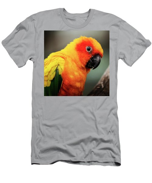 Close Up Of A Sun Conure Parrot. Men's T-Shirt (Athletic Fit)