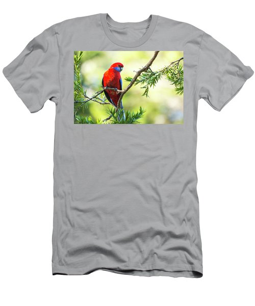 Crimson Rosella Men's T-Shirt (Athletic Fit)
