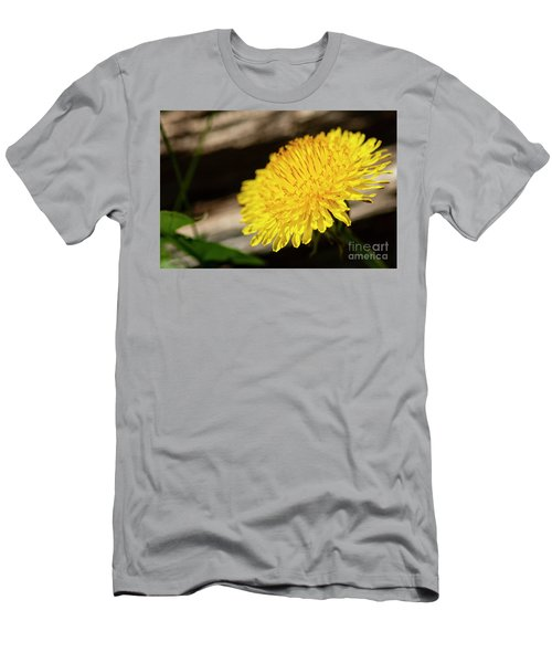 Dandelion In Bloom Men's T-Shirt (Athletic Fit)