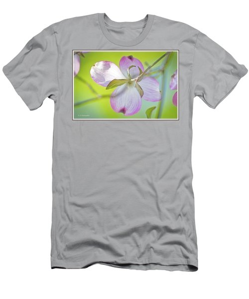 Dogwood Blossom In Spring Men's T-Shirt (Athletic Fit)