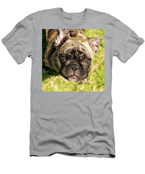 French Bull Dog Men's T-Shirt (Athletic Fit)