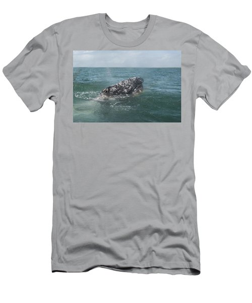 Gray Whale In Bahia Magdalena Men's T-Shirt (Athletic Fit)