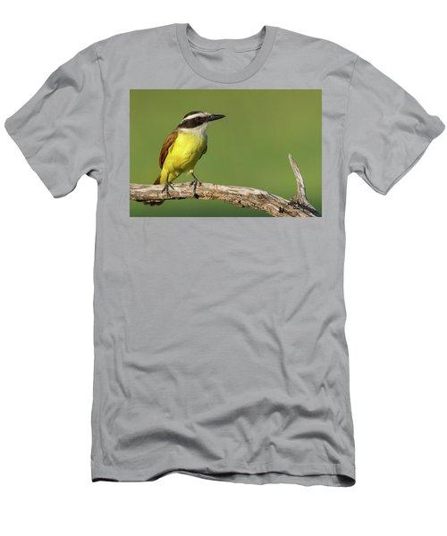 Great Kiskadee Men's T-Shirt (Athletic Fit)