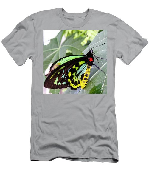 Insect Kaleidescope Men's T-Shirt (Athletic Fit)