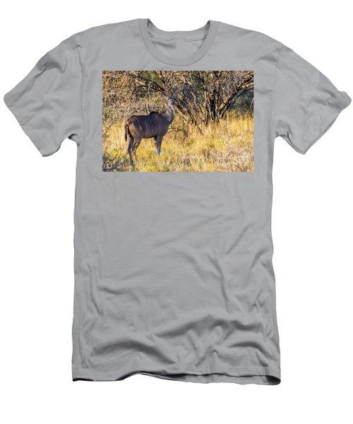 Kudu, Namibia Men's T-Shirt (Athletic Fit)