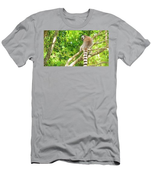 Lemur By Itself In A Tree During The Day. Men's T-Shirt (Athletic Fit)