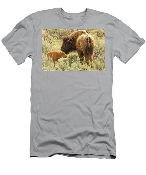 A Bison And Her Calf Men's T-Shirt (Athletic Fit)