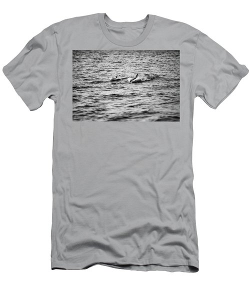 Mother Dolphin And Calf Swimming In Moreton Bay. Black And White Men's T-Shirt (Athletic Fit)