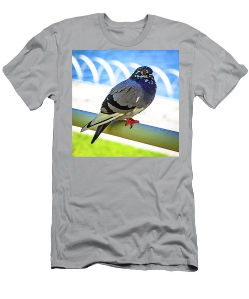 Mr. Pigeon Men's T-Shirt (Athletic Fit)