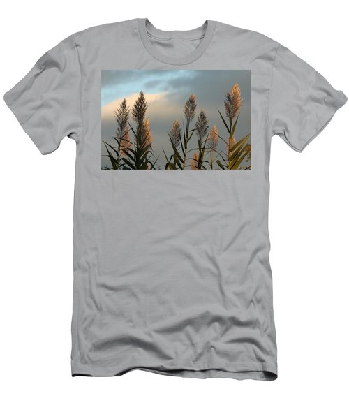 Ornamental Pampas Grass Men's T-Shirt (Athletic Fit)