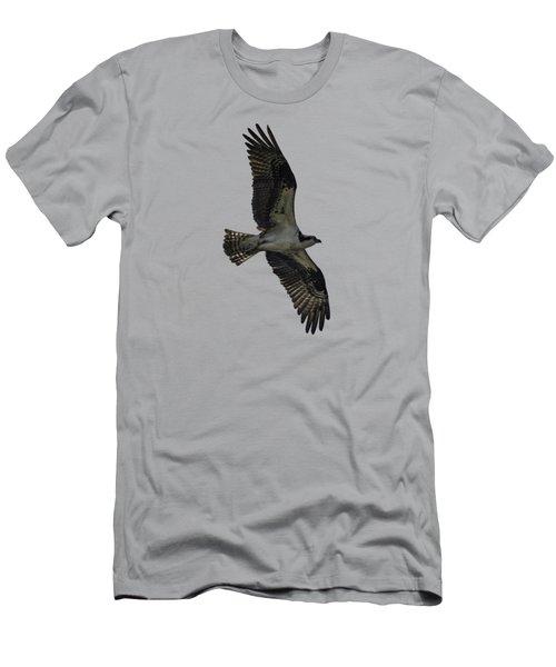 Osprey Soaring Men's T-Shirt (Athletic Fit)