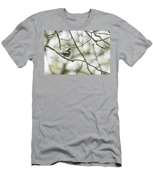 Pied Flycatcher Men's T-Shirt (Athletic Fit)