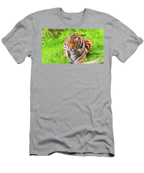 Ready To Pounce Men's T-Shirt (Athletic Fit)