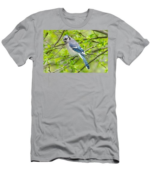 Springtime Bluejay Men's T-Shirt (Athletic Fit)