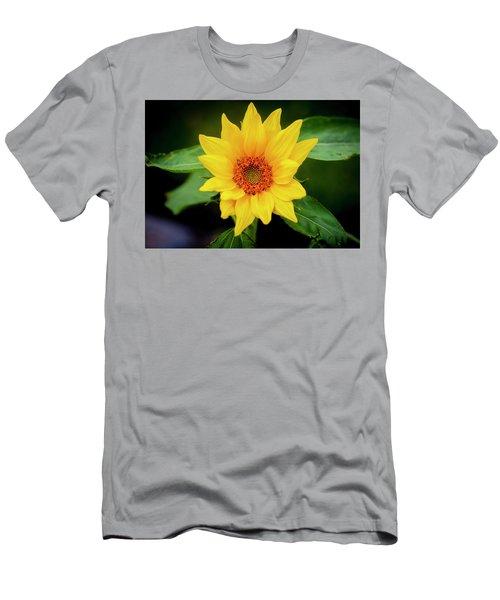 Sunflowers  Helianthus 017 Men's T-Shirt (Athletic Fit)