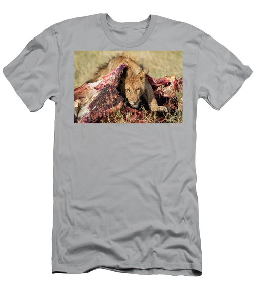 Young Lion On Cape Buffalo Kill Men's T-Shirt (Athletic Fit)
