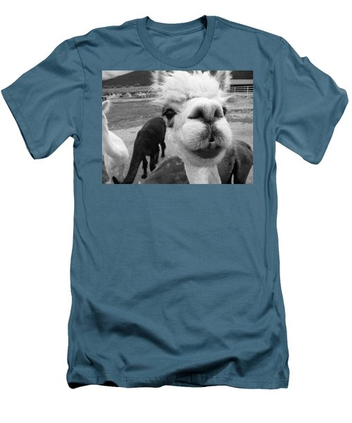 Alpaca Face Men's T-Shirt (Athletic Fit)