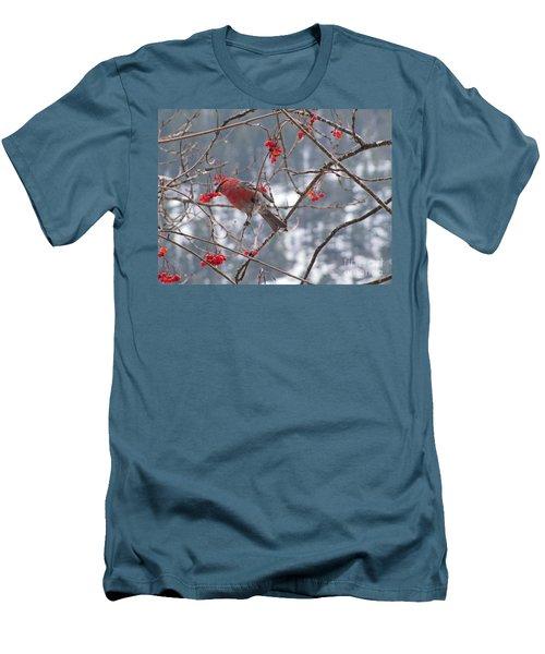Pine Grosbeak And Mountain Ash Men's T-Shirt (Athletic Fit)