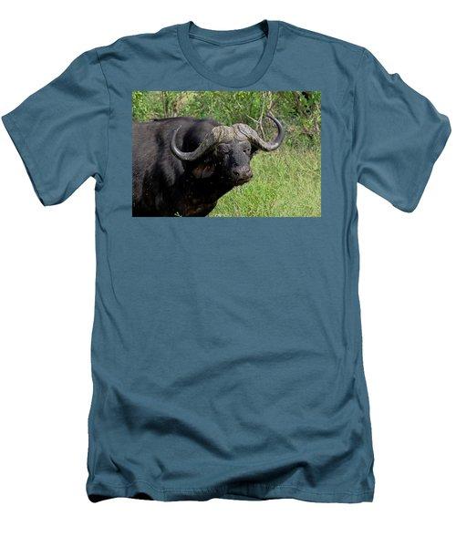 Cape Buffalo Men's T-Shirt (Slim Fit) by Tony Murtagh