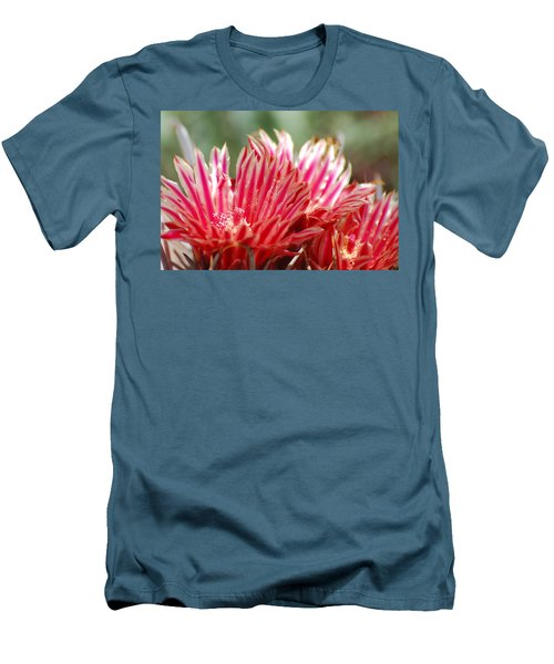 Barrel Cactus Flower Men's T-Shirt (Athletic Fit)